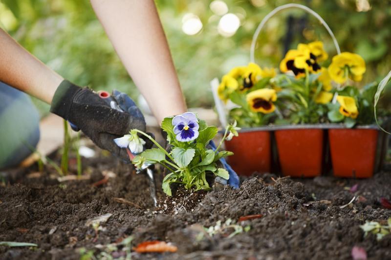 گل و گیاه بکارید تا حالتان بهتر شود