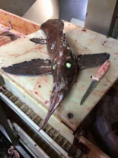 کشف ماهی مرموز در یکی از جزایر کانادا
