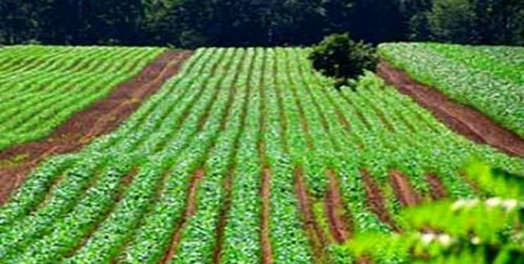 ضایعات کشاورزی به فرصتی مالی تبدیل می گردد