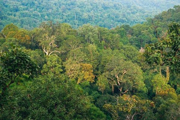 گیاهان به ردیابی اجساد در جنگل ها یاری می نمایند