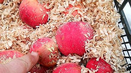 روش هایی برای نگهداری سیب در خانه