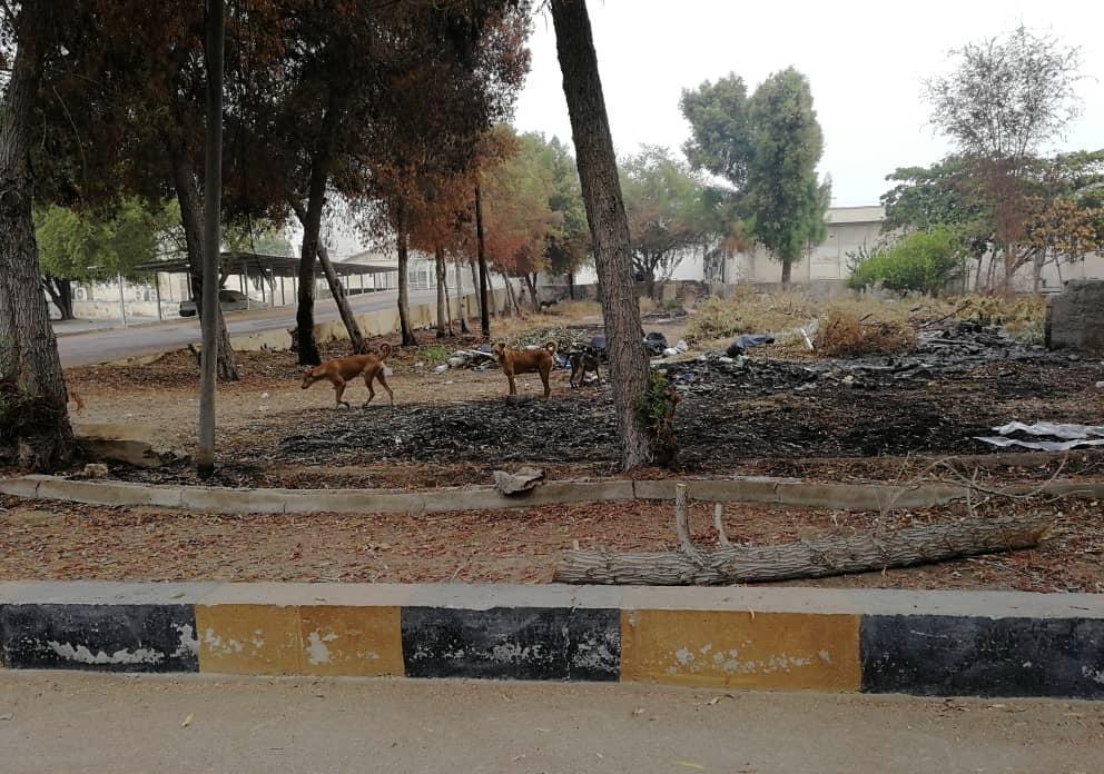 حمله سگ ها به اینترن هاى بیمارستان شهید محمدی بندرعباس، شوراى صنفى دانشجویان پیگیر است