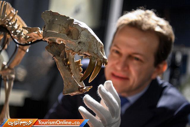 حراج اسکلت 37میلیون ساله