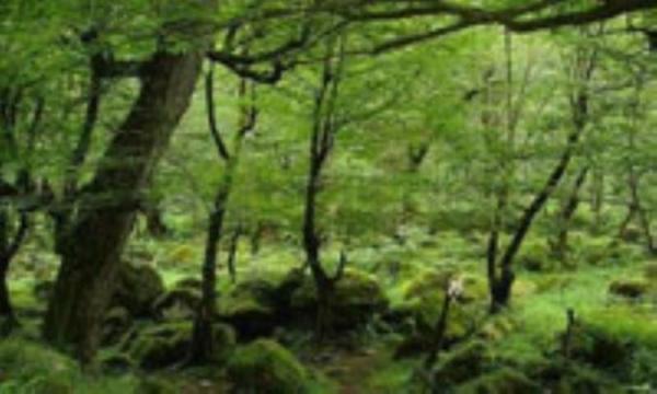 حقایقی درباره جنگل ها